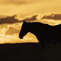 Wild Horse Sunrise by Priscilla Burgers