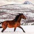Wild Horse by Todd Klassy