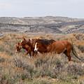 Wild Horse Trio by Max Allen