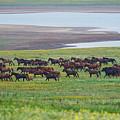 Wild Horses #34 by Artur Baboev