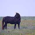 Wild Horses #4 by Artur Baboev