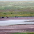 Wild Horses by Artur Baboev