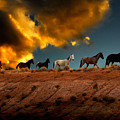 Wild Horses At Sunset by Harry Spitz