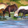 Wild Horses At The Watering Hole by Michael Lee