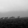 Wild Horses  by Branden Kruis