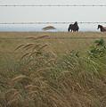 Wild Horses by Brandy Herren
