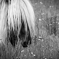 Wild Horses-bw by Joye Ardyn Durham