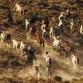 Wild Horses Gone Wild by Priscilla Burgers