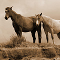 Wild Horses In Western Dakota by Cris Fulton