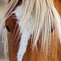 Wild Horses In Wyoming by David Burke