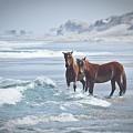 Wild Horses by Linda Cullivan