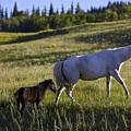 Wild Horses Near Glacier National Park by Richard Steinberger