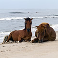 Wild Horses Of Assateague Island by Edward Kreis