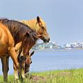 Wild Horses Of Assateaque by Scott Rhoads