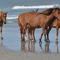 Wild Horses Of Corolla by Dan Williams