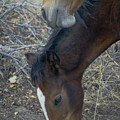 Wild Horses Of Nevada 5 by Catherine Sobredo