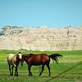 Wild Horses Of South Dakota by Elizah Monai