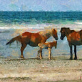 Wild Horses Of The Outer Banks by Lynne Jenkins