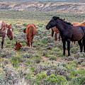 Wild Horses Of White Mountain by Rodney Cammauf