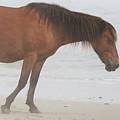 Wild Horses On The Beach 2 by David Stasiak