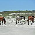 Wild Horses On The Beach by D Hackett