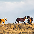 Wild Horses On The Bisti by Darby Donaho