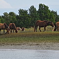 Wild Horses by Rene Barger