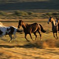 Wild Horses Running Together by Natural Selection Craig Tuttle