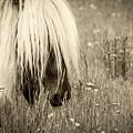 Wild Horses-sepia by Joye Ardyn Durham