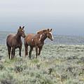 Wild Horses - Steens 1 Rw by Belinda Greb