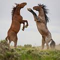 Wild Horse Challenge by Terry Hawthorne