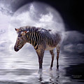 Wild In The Moonlight by Carol Cavalaris