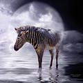Wild In The Moonlight by Carol Cavalaris