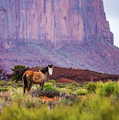 Wild In The Valley by Anthony Michael Bonafede