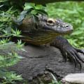 Wild Komodo Dragon Crawling Through Nature by DejaVu Designs