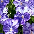 Wild Mountain Flowers by Randy Morgan