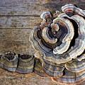 Wild Mushroom by Steve Somerville