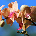 Wild Orchid by Imagery-at- Work