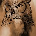 Wild Owl Eyes by Gull G