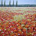 Wild Poppies by Martin Hyross