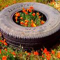 Wild Poppies Recycled by Jerome Stumphauzer