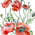Wild Poppies by Sharon Cox