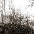 Wild Potomac Poodle by Allan Janus