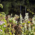 Wild Riverside Weeds And Flowers by William Tasker