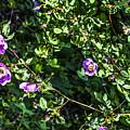Wild Rose Habitat by Marsha del Sol Mildon