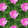 Wild Rose Pattern by Kathleen Sartoris