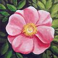 Wild Rose by Sharon Marcella Marston