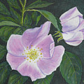 Wild Rose by Sheryn Johnson