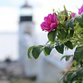Wild Roses At Marshall Point by John Meader