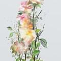 Wild Roses by Ivana Westin